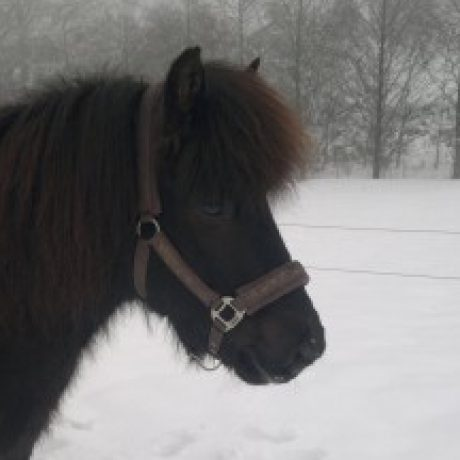 Profilbild von Heintz